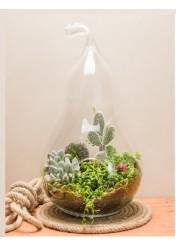 (mr606) succulent kaktüs aranjmanı