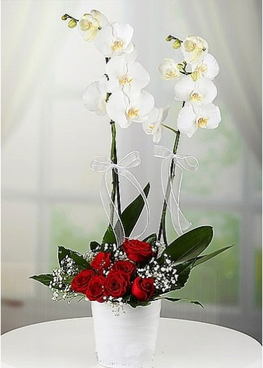 (mr1314) Çift dal Orkide ve Güller