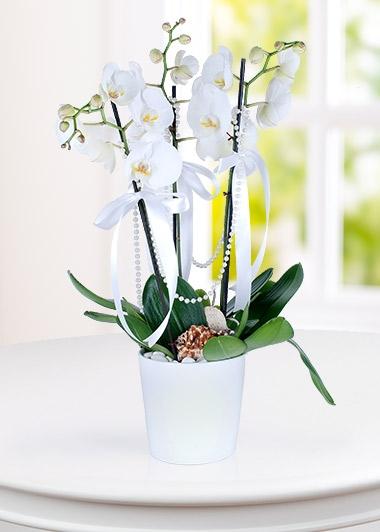 (mr204) 3'lü Orkide