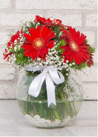 (mr4005) Fanusta Kırmızı Gerberalar