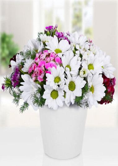 (mr4007) Vazoda Papatya ve Kır Çiçekleri
