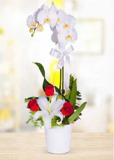(mr200-1) Orkide Gül Lilyum